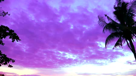 představit si : pan vertical silhouette coconut sunset on sea and purple cloud on the sky