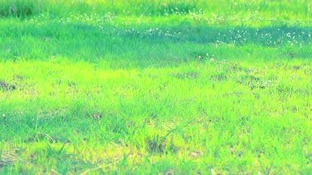 ot : grass in the field and sunlight in the morning