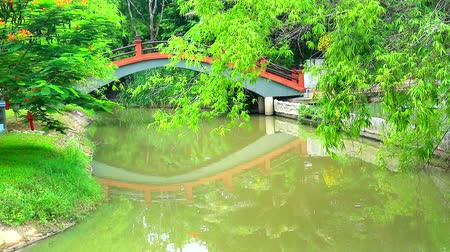 pontão : reflection bridge on lake surface in park and bamboo branch over water