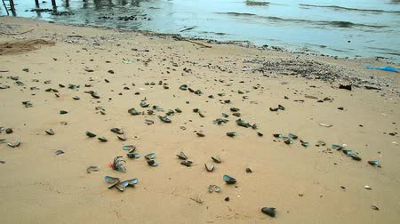 temper : Shells die on the beach due to rising sea temperatures due to global warming1