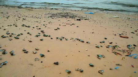 white sand : Shells die on the beach due to rising sea temperatures due to global warming