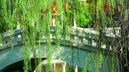 weeping : concrete bridge chinese style and willow swaying in the garden