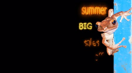 summer big sales off 80 per cen text effect with animal background