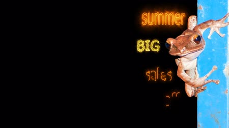 por cento : summer big sales off 80 per cen text with animal background