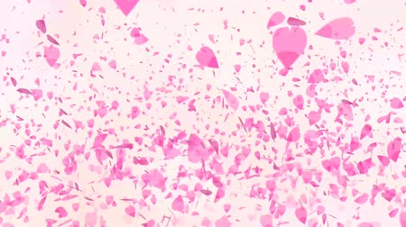 kartka urodzinowa : Million pink sakura leaves floating and fly in the air light rose background