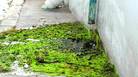přežití : Wastewater from the damaged pipes causes the moss to grow on concrete