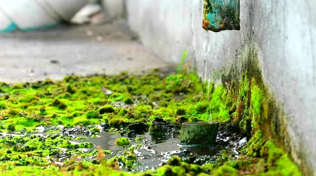 ścieki : Wastewater from the damaged pipes causes the moss to grow Wideo