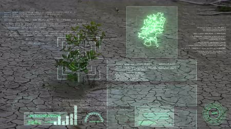 homeopathic : herb survival in dry land and AI analysis scan and informations Stock Footage
