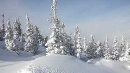 мороз : Beautiful winter landscape with snow covered trees Стоковые видеозаписи