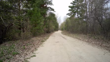 drive through : Dirt road in the forest, leaving in the distance, on a spring day