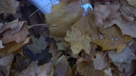 the legs of a man playing with yellow leaves in the Park. Stock Footage