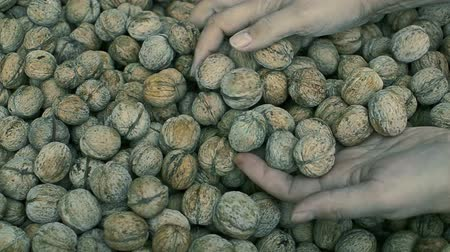 handful : walnut harvest agriculture