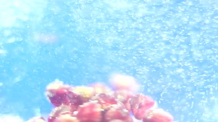 abstrakcja : fruit under water, selective focus bokeh bubbles abstraction closeup