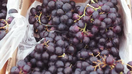 лоза : black grapes on the market Стоковые видеозаписи