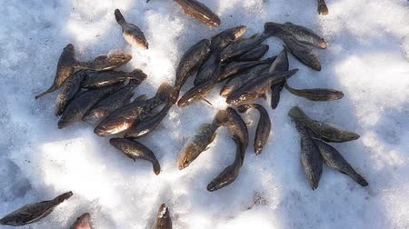 ужение : catch fish in the snow winter fishing