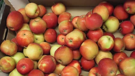 klasa : red yellow apples background on the market counter