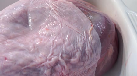 fennel : raw Turkey leg closeup macro Stock Footage