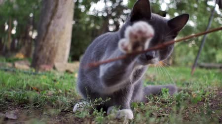 кошачий : gray kitten playing on the grass, selective focus