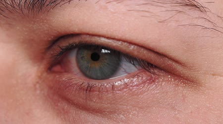 оптический : green eye of a young guy close-up macro detail. The eyes of the millennial, selective focus
