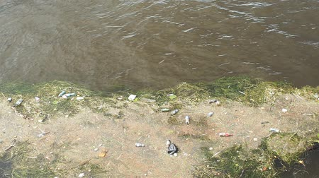 reciclagem : Plastic bottles in a polluted river water. Vídeos