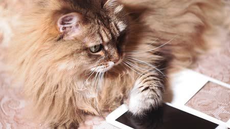 kürklü : fluffy cat is lying on the sofa in close-up. the mobile phone is nearby.