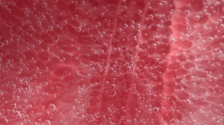 občerstvení : Fresh grapefruit dropped into water with bubbles. selective focus juicy ripe fruit in water close-up, macro