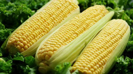 pálido : Closeup shot of pale yellow corncobs with fresh green salad leaves around in soft light Vídeos