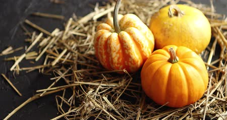 hay pile : From above view of three orange pumpkins placed on heap of hay on black background Stock Footage