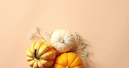 disposição : From above view of orange and white pumpkins laid on herbs on beige background