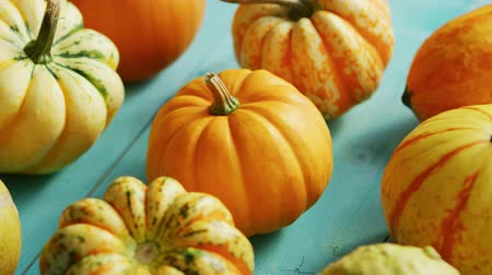 сквош : From above view of ripe orange pumpkins placed in lines on wooden background Стоковые видеозаписи