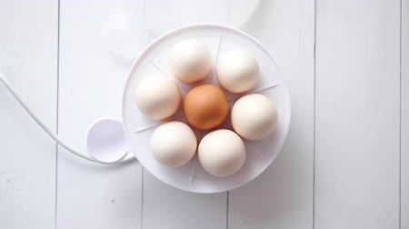 capa dura : Chicken eggs in a egg electric cooker on a white wooden table ready for boiling.