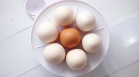 casca de ovo : Chicken eggs in a egg electric cooker on a white wooden table ready for boiling.