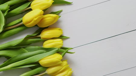 marcha : Row of fresh Yellow tulips on white wooden table. Top view, flat lay with space for you text. Vídeos