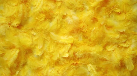rozmazaný : Yellow feathers background. Flat lay, top view Dostupné videozáznamy