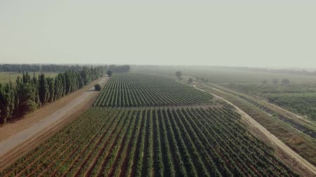 Aerial flight over beautiful vineyard landscape