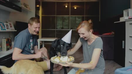 a big black lab with a birthday party hat on it eating cake.