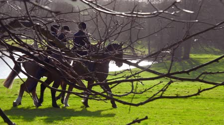 richmond park : Aske Hall, Richmond, North Yorkshire, UK - February 08, 2020: A group of horse riders seen through branches as they ride slowly across a field prior to the beginning of a fox hunt Stock Footage
