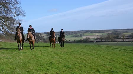 mounted : Aske Hall, Richmond, North Yorkshire, UK - February 08, 2020: Horse riders at a fox hunt ride towards the camera in the English countryside Stock Footage