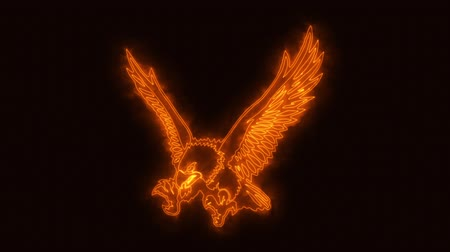 ファルコン : Orange Burning Eagle Animated Logo with Reveal Effect 動画素材