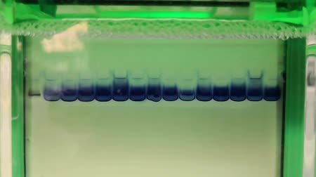 clear liquid : Approach of a scientific experiment of separation of proteins by means of electrophoresis (SDS-PAGE)