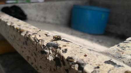 material body : slow motion footage about a black fly cleaning its body and wings with its hind legs over a stone washbasin Stock Footage