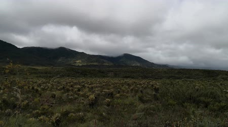 Panoramic of a paramo ecosystem in the Andean mountains of the Purace National Natural Park in southwestern Colombia. Endangered vegetation due to climate change. Specifically mosses and frailejones (Espeletia) that are a source of water.