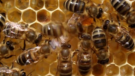 mel : Bees are always active. Certain groups of insects perform certain functions.