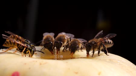 macro : Battle of insects: bees chased implementation of honey.