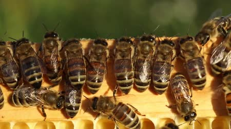 znalost : Young bees learn about the world around them.