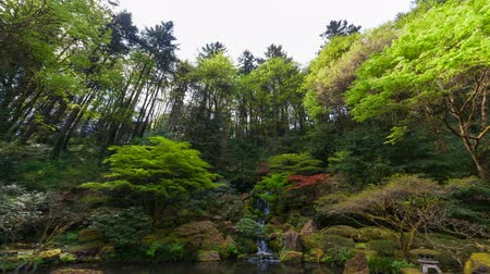 japonka : Time lapse movie of clouds over beautiful waterfall with lush green trees and plants in Portland Japanese Garden Spring season 4k uhd 4096x2304