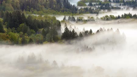 düşük : Ultra high definition 4k uhd time lapse closeup video of low moving and rolling fog and mist over Sandy river from Jonsrud viewpoint in Sandy OR 4096x2304