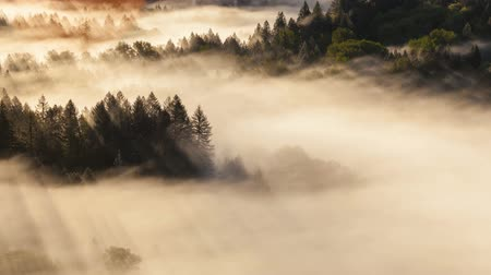 pacífico : Time lapse video of low moving fog with piercing sun rays over crooked Sandy River at Sunrise one early morning in Oregon 4k uhd 4096x2304