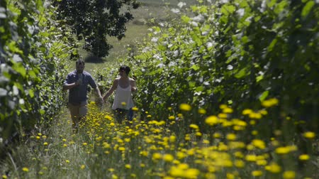 pincészet : Couple holds hands as they walk up a row in a Vineyard, holding glasses of wine Stock mozgókép