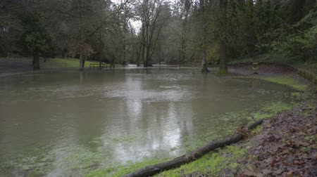 patak : Hess Creek flooding in Herbert Hoover park in December 2015 at Herbert Hoover Park in Newberg, Oregon.